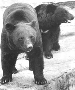 日本の野生動物問題